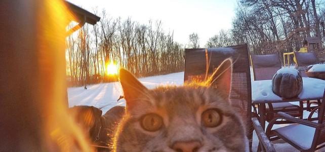 自撮りが大好きな猫ちゃん