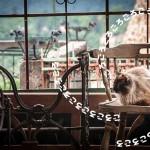 猫のゴロゴロ