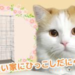 ある日突然猫のいる生活 – 3 –