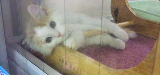 ある日突然猫のいる生活 – 2 –
