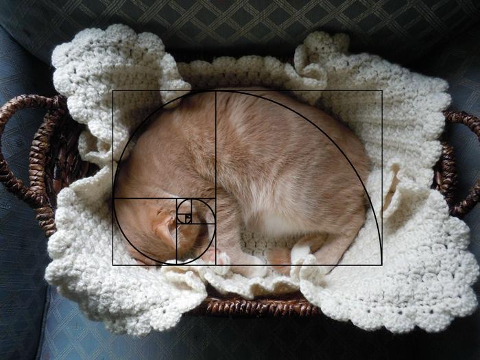 fibonacci-composition-cats-furbonacci-61__700