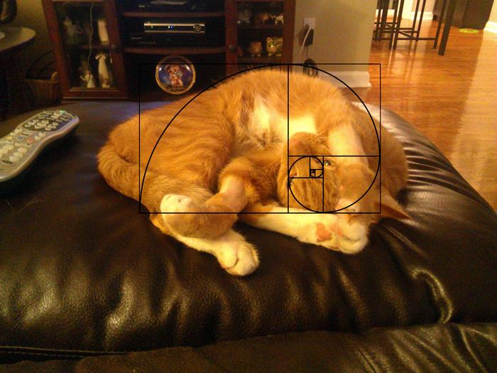 fibonacci-composition-cats-furbonacci-6__700