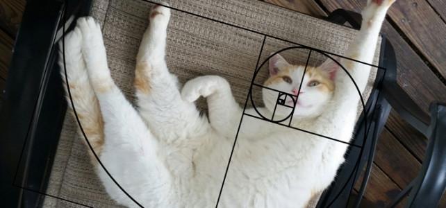 [黄金比] 猫はパーフェクトな美しさを持つ動物だった?