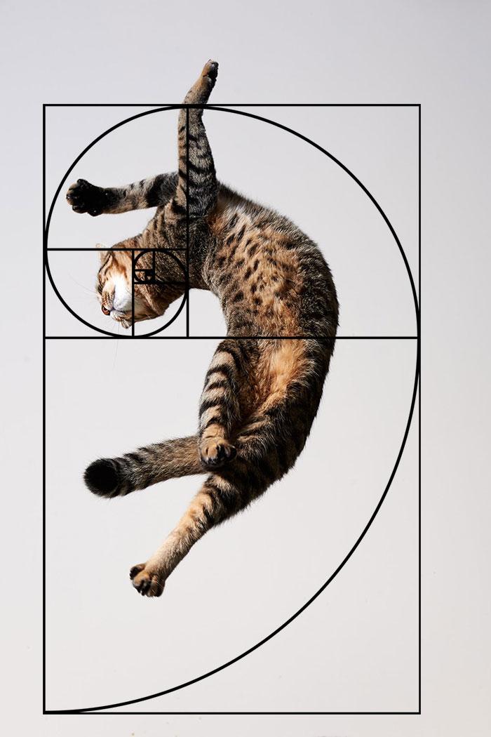 fibonacci-composition-cats-furbonacci-url-7__700