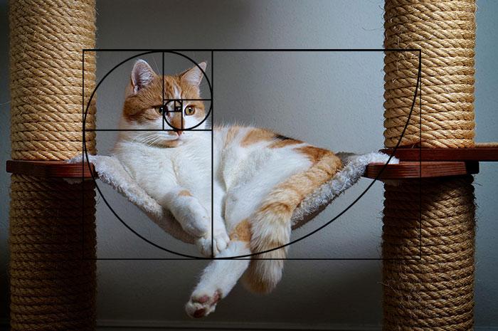 fibonacci-composition-cats-furbonacci-url-9__700