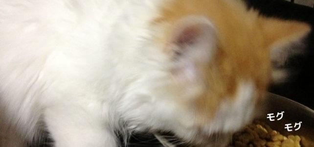 ある日突然猫のいる生活 – 5 –