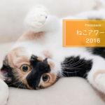 「ねこアワード 2016」明日より開催!!