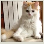 ある日突然猫のいる生活 – 6 –
