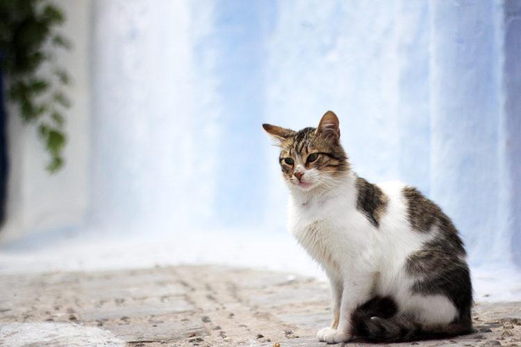 シャウエンの猫01
