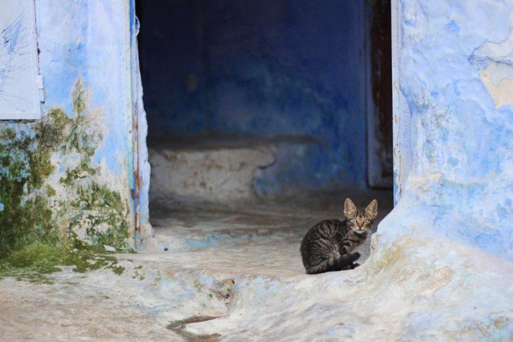 シャウエンの猫03
