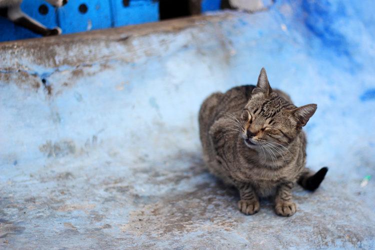 シャウエンの猫02