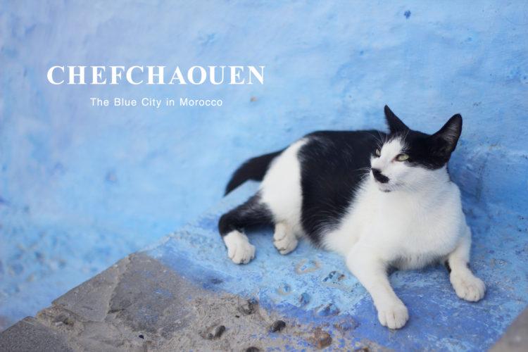 シャウエンの猫