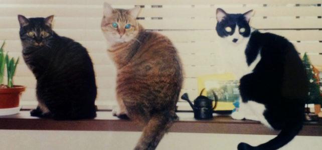 深夜の猫会議