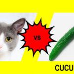猫vsキュウリ