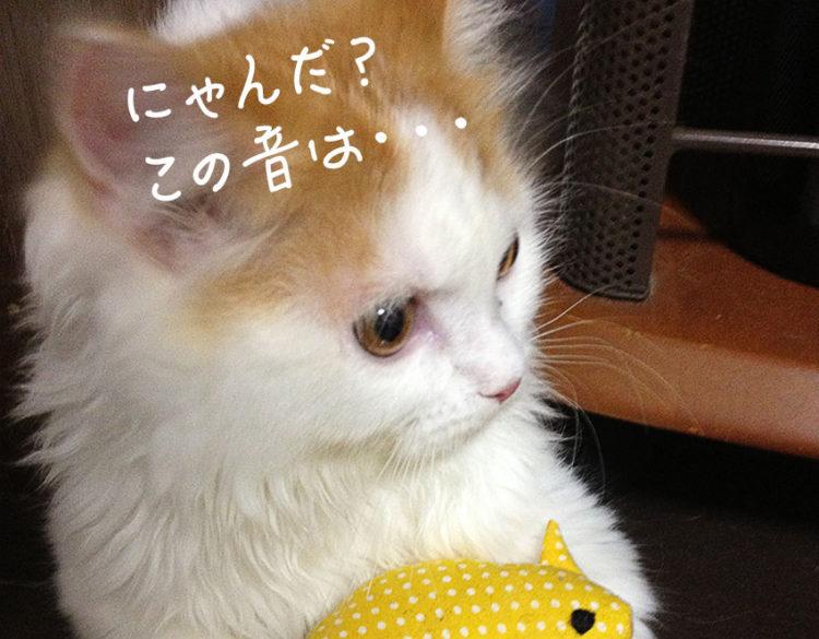蚊の音に反応する猫
