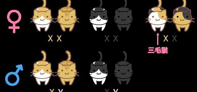 オスの三毛猫はなぜ珍しい?驚きのその理由とは!