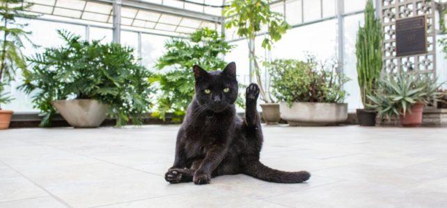 ガジュマルがー!!猫が草をかじる理由