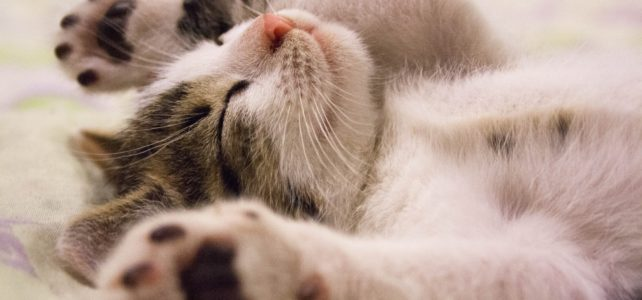 猫も人間と同様に夢を見るの?