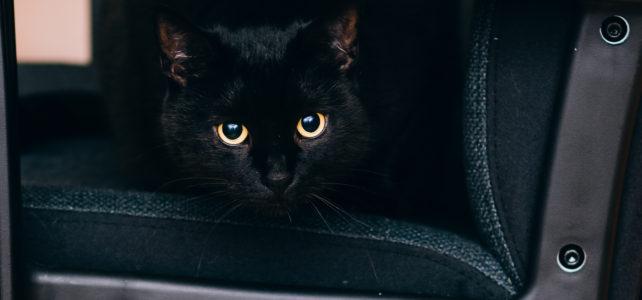 GW前に知っておきたい猫の車酔い