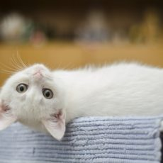ネコに肩こりってあるの?