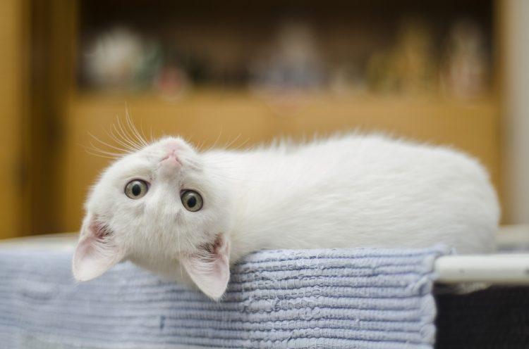 猫の肩こり