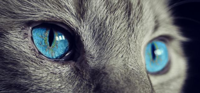 ネコの目の秘密。猫は目がいいの?