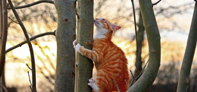なぜ猫は木登りできるの?体の構造から見る犬との違い。