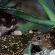 ネコと人間の関わりから見るネコが愛される理由