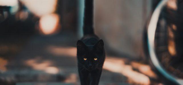 黒猫は不吉?