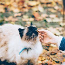 猫に愛を叫ぶ