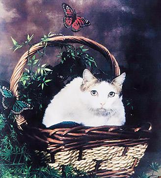 猫 長寿 ギネス