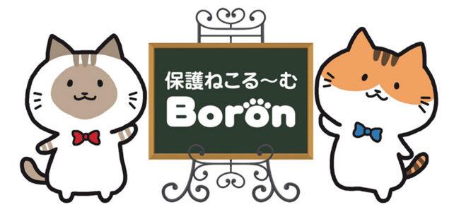 保護ねこるーむBoron