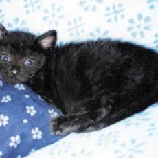 人生を変えた猫 NPO法人 動物福祉団体 HEART TOKUSHIMA