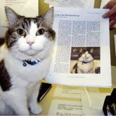 旅立ちを予知する猫