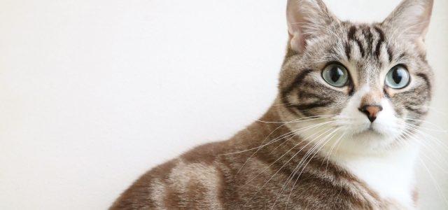 猫にとって快適な温度は?